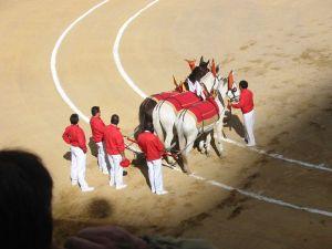 Bullfight10