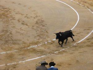 Bullfight15