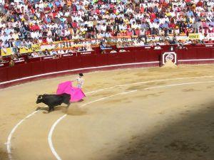Bullfight16