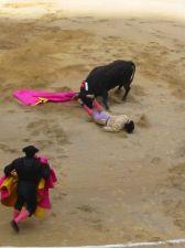 Bullfight18