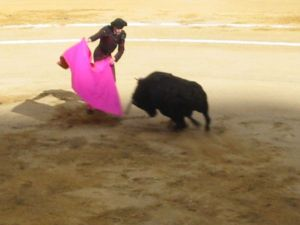 Bullfight19