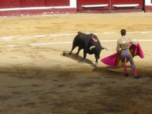 Bullfight20