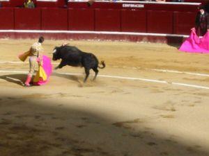 Bullfight21