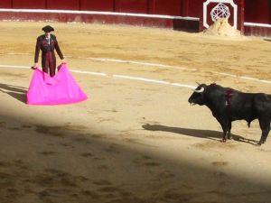 Bullfight24