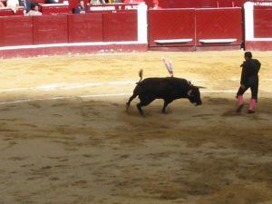 Bullfight25