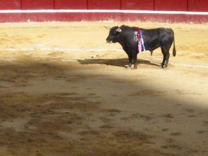 Bullfight27
