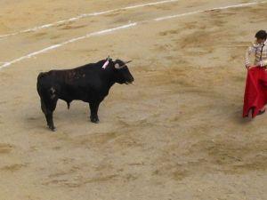 Bullfight35