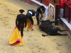 Bullfight39
