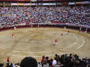 Bullfight41