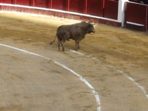 Bullfight44