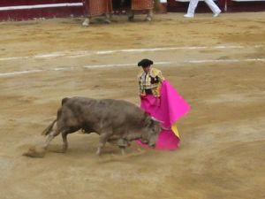 Bullfight46