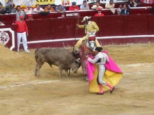Bullfight49