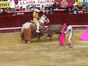 Bullfight50