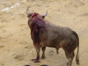 Bullfight52