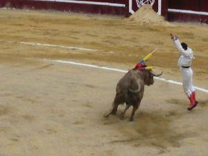 Bullfight54