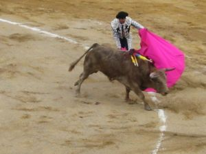 Bullfight55