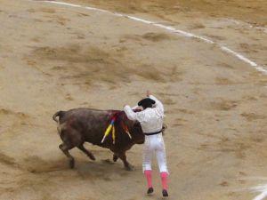 Bullfight56