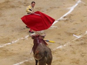 Bullfight58