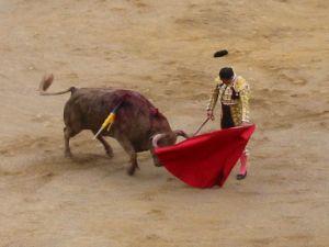 Bullfight61