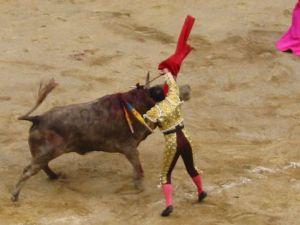 Bullfight66