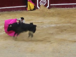 Bullfight71