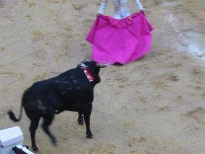 Bullfight83