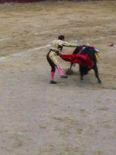 Bullfight84