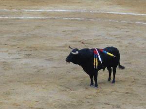 Bullfight85