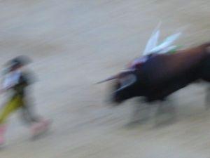 Bullfight89