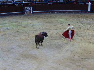 Bullfight93