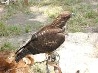 Hawk-GalbraithCamp