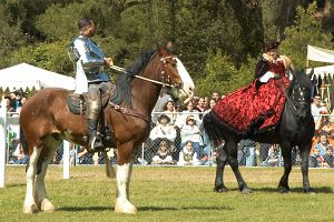 HorsesAndRiders