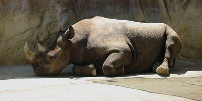 RhinoRelaxing