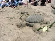 Animal-Turtle